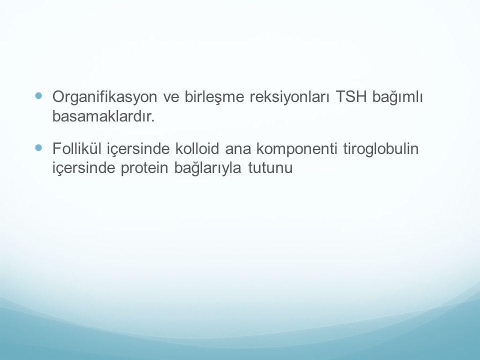 Organifikasyon ve birleşme reksiyonları TSH bağımlı basamaklardır. Follikül içersinde kolloid ana komponenti tiroglobulin içersinde protein bağlarıyla