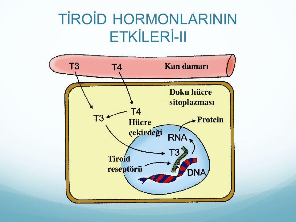 TİROİD HORMONLARININ ETKİLERİ-II