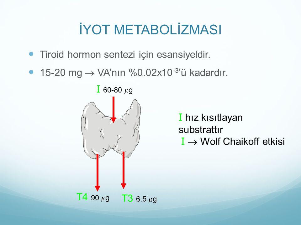 İYOT METABOLİZMASI Tiroid hormon sentezi için esansiyeldir. 15-20 mg ® VA'nın %0.02x10 -3 'ü kadardır. I 60-80 mg T4 90 mg T3 6.5 mg I hız kısıtlayan