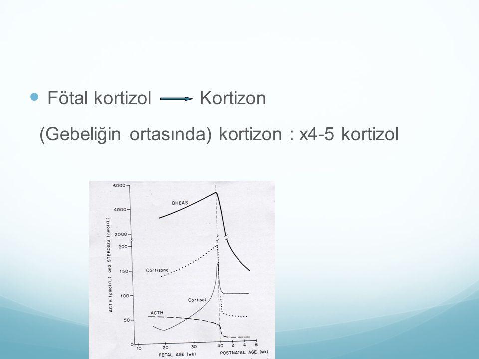Fötal kortizol Kortizon (Gebeliğin ortasında) kortizon : x4-5 kortizol