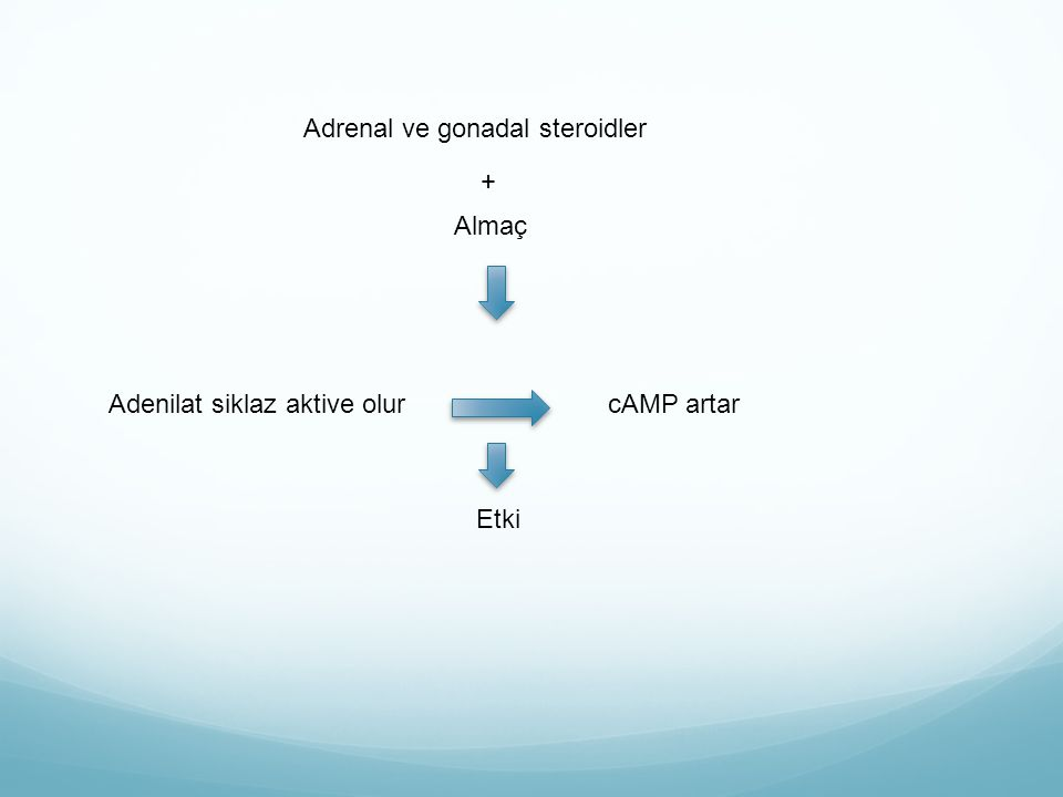 Adrenal ve gonadal steroidler Almaç Adenilat siklaz aktive olurcAMP artar Etki +