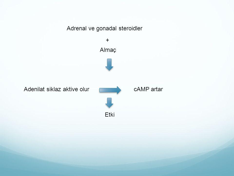 BH BH-BHBP BH reseptörünün ekstraselüler parçası