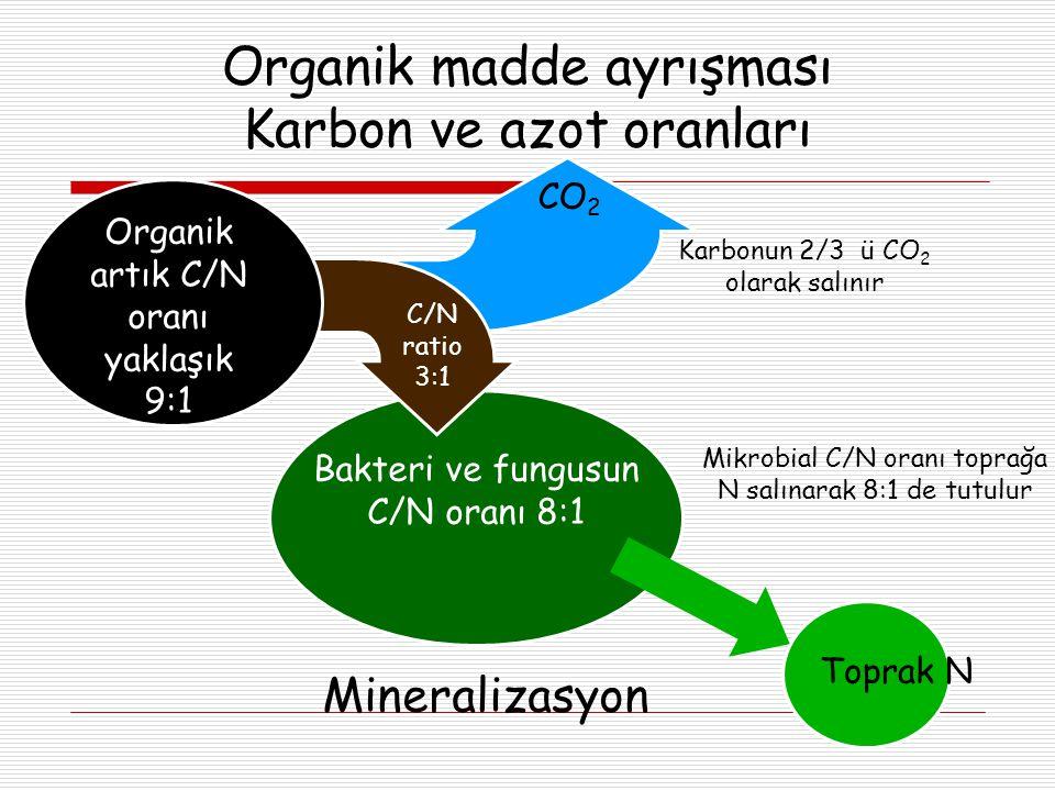 Organik madde ayrışması Karbon ve azot oranları Bakteri ve fungusun C/N oranı 8:1 Organik artık C/N oranı yaklaşık 9:1 Organik artık C/N oranı yaklaşık 9:1 CO 2 C/N ratio 3:1 Karbonun 2/3 ü CO 2 olarak salınır Mineralizasyon Toprak N Mikrobial C/N oranı toprağa N salınarak 8:1 de tutulur