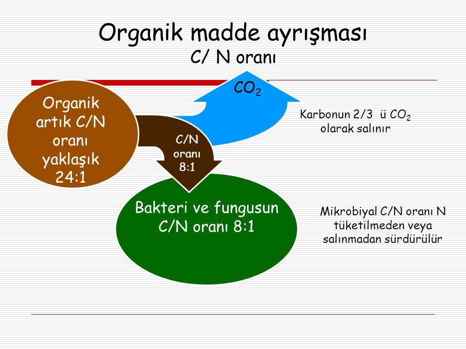 Organik madde ayrışması C/ N oranı Organik madde ayrışması C/ N oranı Bakteri ve fungusun C/N oranı 8:1 Organik artık C/N oranı yaklaşık 24:1 CO 2 C/N oranı 8:1 Karbonun 2/3 ü CO 2 olarak salınır Mikrobiyal C/N oranı N tüketilmeden veya salınmadan sürdürülür