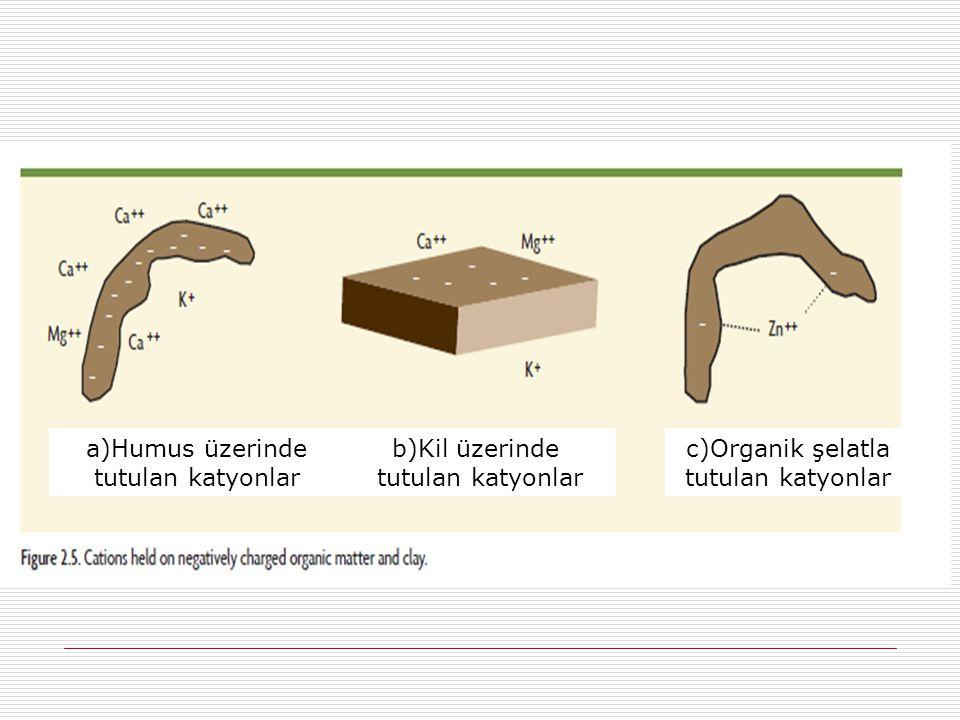 a)Humus üzerinde tutulan katyonlar b)Kil üzerinde tutulan katyonlar c)Organik şelatla tutulan katyonlar