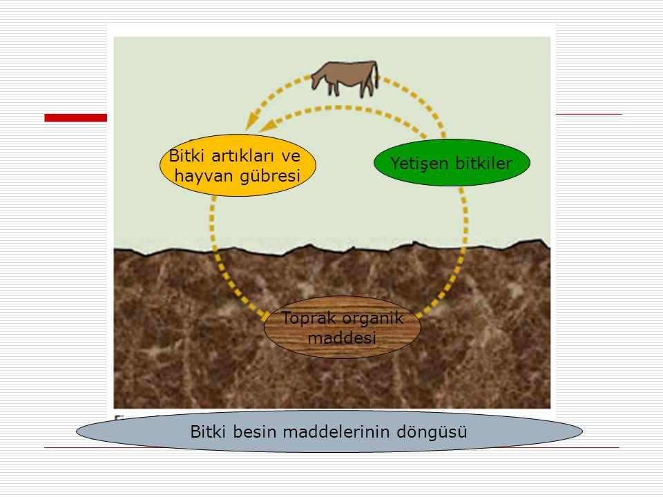Bitki besin maddelerinin döngüsü Bitki artıkları ve hayvan gübresi Yetişen bitkiler Toprak organik maddesi