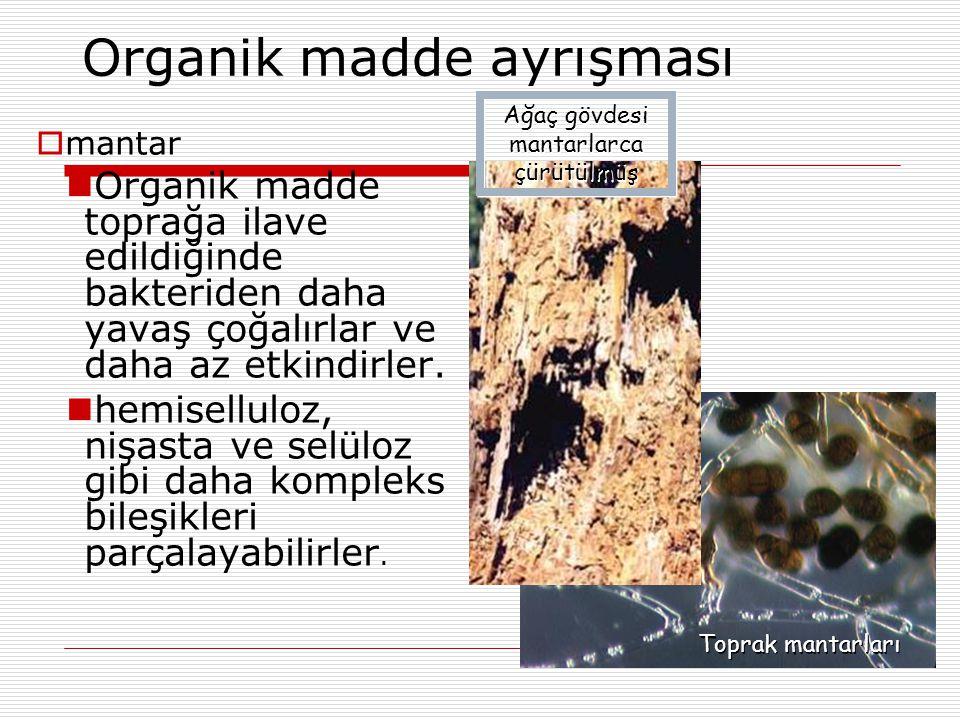 Organik madde ayrışması  mantar Organik madde toprağa ilave edildiğinde bakteriden daha yavaş çoğalırlar ve daha az etkindirler.