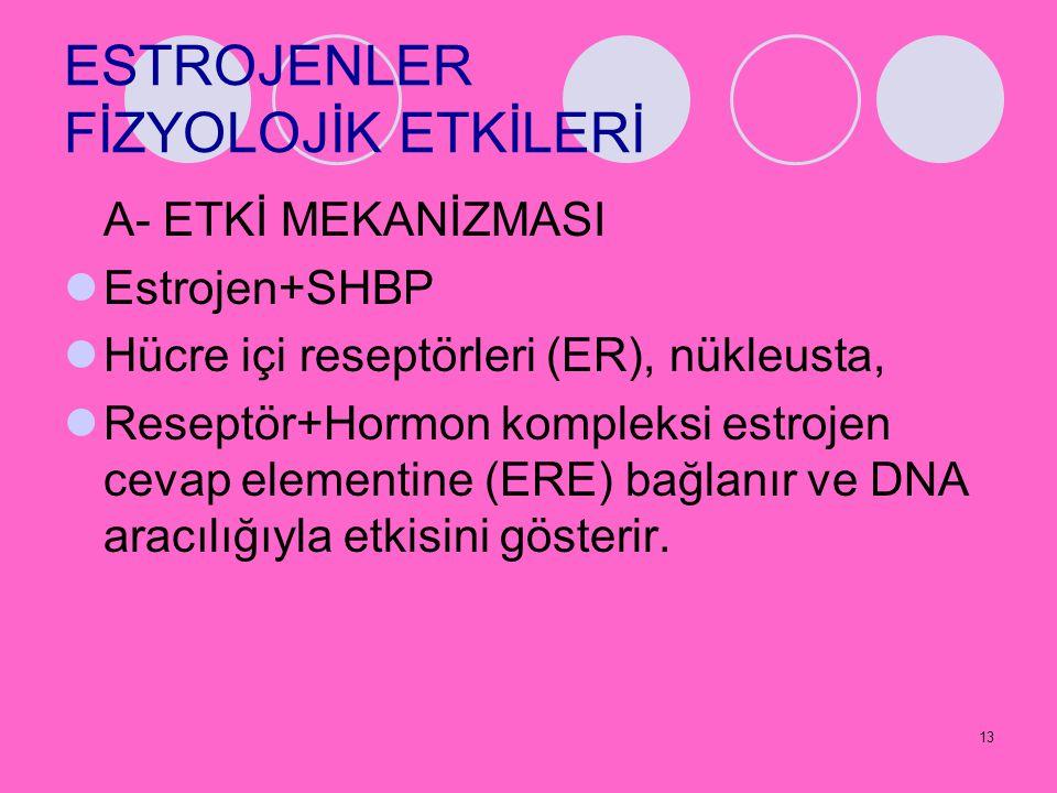 13 ESTROJENLER FİZYOLOJİK ETKİLERİ A- ETKİ MEKANİZMASI Estrojen+SHBP Hücre içi reseptörleri (ER), nükleusta, Reseptör+Hormon kompleksi estrojen cevap