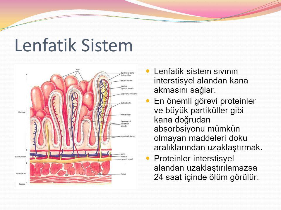Lenfatik Sistem Lenfatik sistem sıvının interstisyel alandan kana akmasını sağlar. En önemli görevi proteinler ve büyük partiküller gibi kana doğrudan