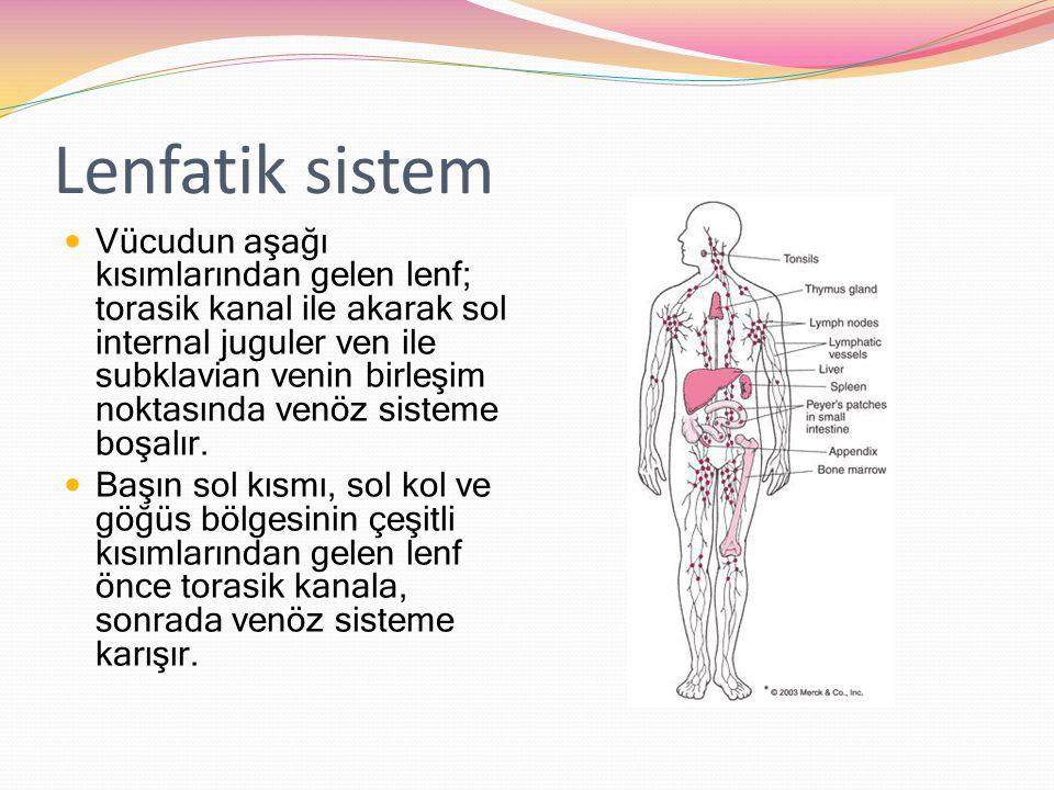 Lenfatik sistem Vücudun aşağı kısımlarından gelen lenf; torasik kanal ile akarak sol internal juguler ven ile subklavian venin birleşim noktasında venöz sisteme boşalır.