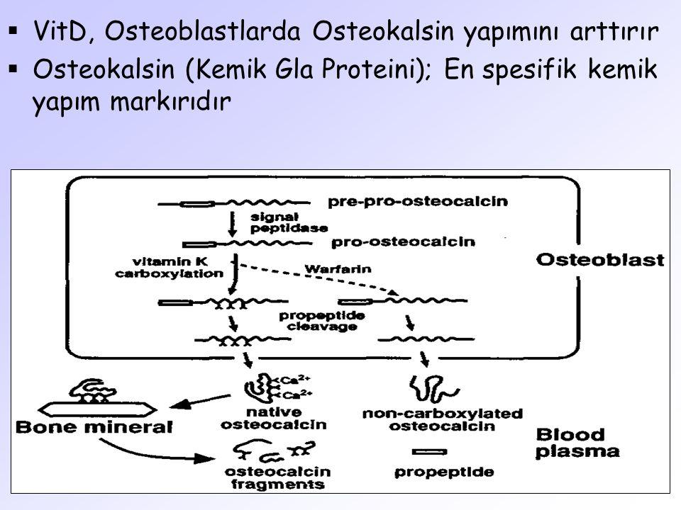  VitD, Osteoblastlarda Osteokalsin yapımını arttırır  Osteokalsin (Kemik Gla Proteini); En spesifik kemik yapım markırıdır