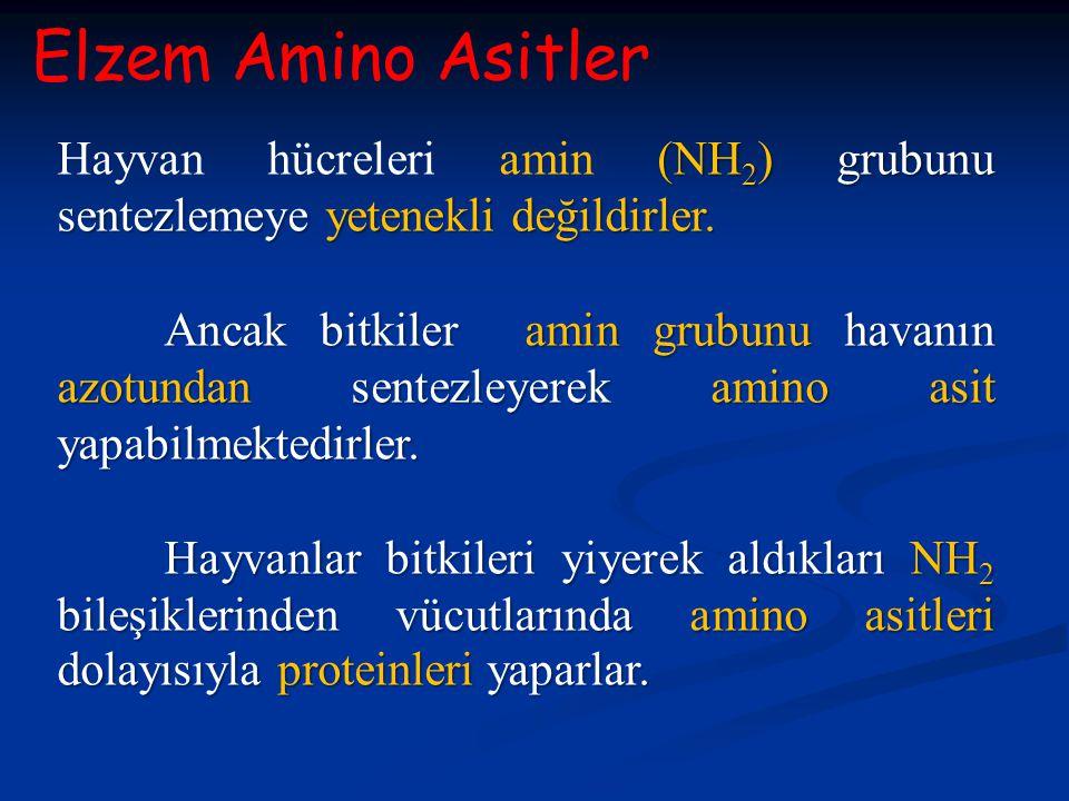 Elzem Amino Asitler (NH 2 ) grubunu sentezlemeye yetenekli değildirler. Hayvan hücreleri amin (NH 2 ) grubunu sentezlemeye yetenekli değildirler. Anca