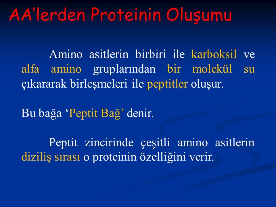 AA'lerden Proteinin Oluşumu Amino asitlerin birbiri ile karboksil ve alfa amino gruplarından bir molekül su çıkararak birleşmeleri ile peptitler oluşu