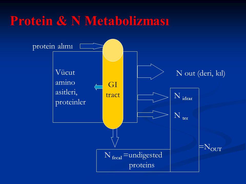 protein alımı Vücut amino asitleri, proteinler N out (deri, kıl) N fecal =undigested proteins N idrar N ter =N OUT Protein & N Metabolizması GI tract