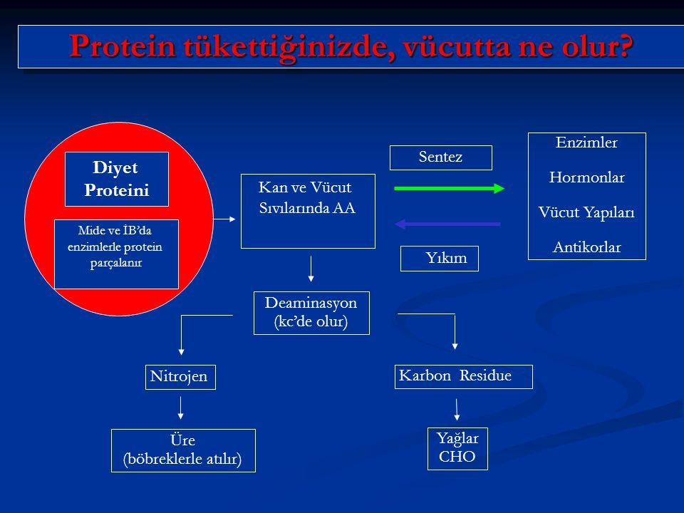 Protein tükettiğinizde, vücutta ne olur? Mide ve İB'da enzimlerle protein parçalanır Kan ve Vücut Sıvılarında AA Sentez Yıkım Enzimler Hormonlar Vücut