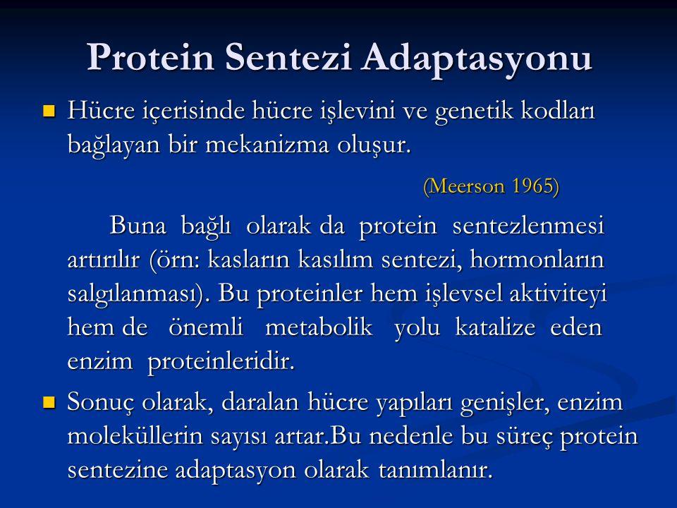 Protein Sentezi Adaptasyonu Hücre içerisinde hücre işlevini ve genetik kodları bağlayan bir mekanizma oluşur. Hücre içerisinde hücre işlevini ve genet