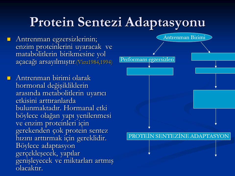 Protein Sentezi Adaptasyonu Antrenman egzersizlerinin; enzim proteinlerini uyaracak ve matabolitlerin birikmesine yol açacağı arsayılmıştır.(Viru1984,