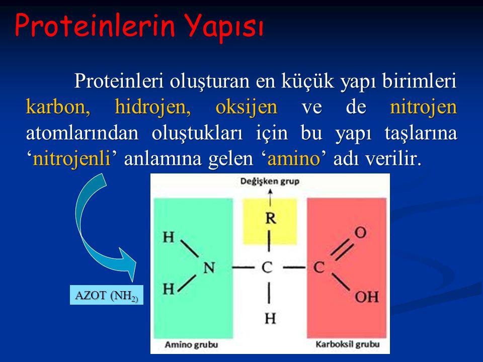 Proteinleri oluşturan en küçük yapı birimleri karbon, hidrojen, oksijen ve de nitrojen atomlarından oluştukları için bu yapı taşlarına 'nitrojenli' an