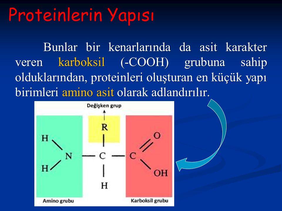 Bunlar bir kenarlarında da asit karakter veren karboksil (-COOH) grubuna sahip olduklarından, proteinleri oluşturan en küçük yapı birimleri amino asit