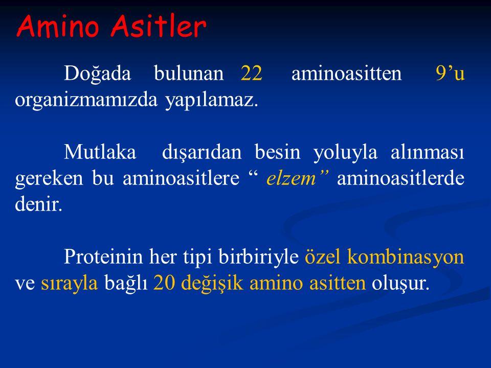 """Amino Asitler Doğada bulunan 22 aminoasitten 9'u organizmamızda yapılamaz. Mutlaka dışarıdan besin yoluyla alınması gereken bu aminoasitlere """" elzem"""""""