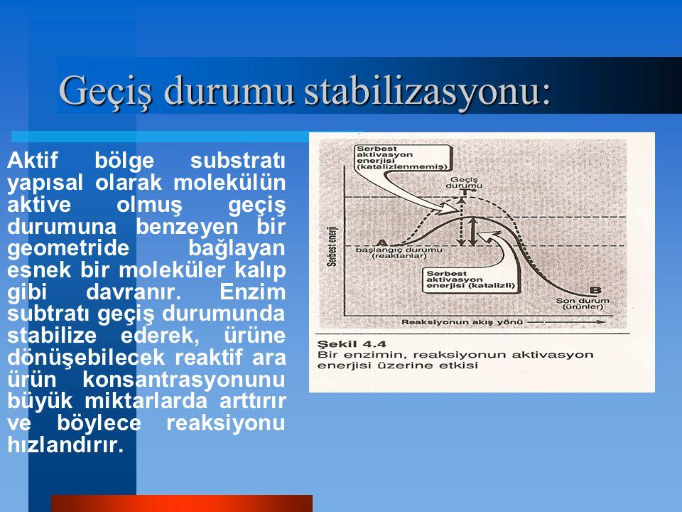 Geçiş durumu stabilizasyonu: Aktif bölge substratı yapısal olarak molekülün aktive olmuş geçiş durumuna benzeyen bir geometride bağlayan esnek bir mol