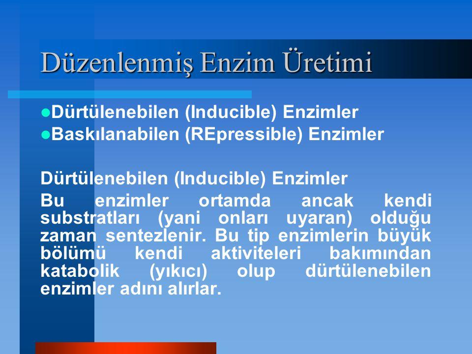 Düzenlenmiş Enzim Üretimi Dürtülenebilen (Inducible) Enzimler Baskılanabilen (REpressible) Enzimler Dürtülenebilen (Inducible) Enzimler Bu enzimler or
