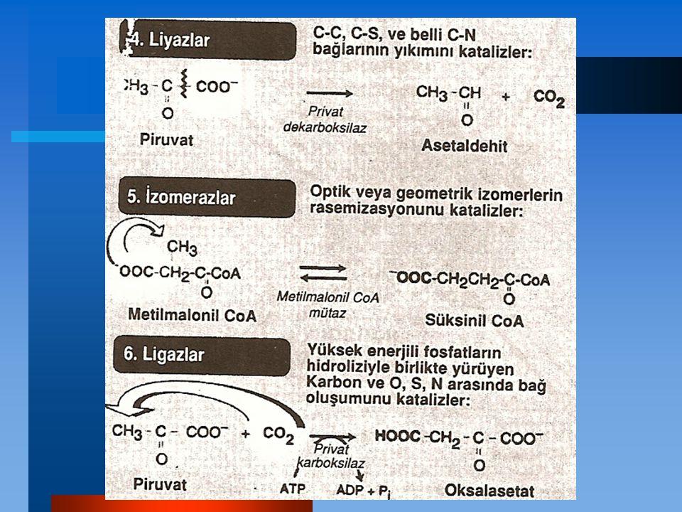 Düzenlenmiş Enzim Üretimi Dürtülenebilen (Inducible) Enzimler Baskılanabilen (REpressible) Enzimler Dürtülenebilen (Inducible) Enzimler Bu enzimler ortamda ancak kendi substratları (yani onları uyaran) olduğu zaman sentezlenir.