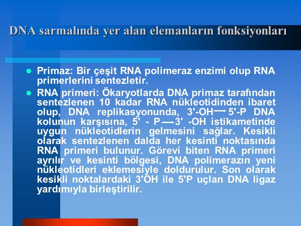 DNA sarmalında yer alan elemanların fonksiyonları Primaz: Bir çeşit RNA polimeraz enzimi olup RNA primerlerini sentezletir. RNA primeri: Ökaryotlarda