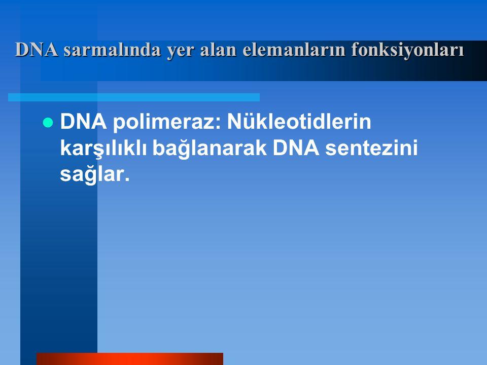 DNA polimeraz: Nükleotidlerin karşılıklı bağlanarak DNA sentezini sağlar. DNA sarmalında yer alan elemanların fonksiyonları