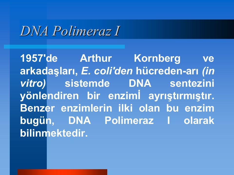 DNA Polimeraz I 1957'de Arthur Kornberg ve arkadaşları, E. coli'den hücreden-arı (in vitro) sistemde DNA sentezini yönlendiren bir enzimİ ayrıştırmışt