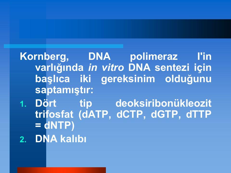 Kornberg, DNA polimeraz I'in varlığında in vitro DNA sentezi için başlıca iki gereksinim olduğunu saptamıştır: 1. Dört tip deoksiribonükleozit trifosf