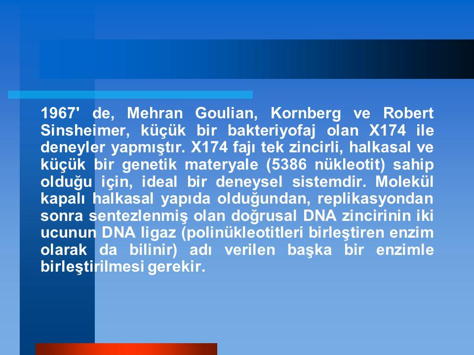 1967' de, Mehran Goulian, Kornberg ve Robert Sinsheimer, küçük bir bakteriyofaj olan X174 ile deneyler yapmıştır. X174 fajı tek zincirli, halkasal ve