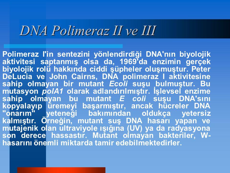 Polimeraz I'in sentezini yönlendirdiği DNA'nın biyolojik aktivitesi saptanmış olsa da, 1969'da enzimin gerçek biyolojik rolü hakkında ciddi şüpheler o