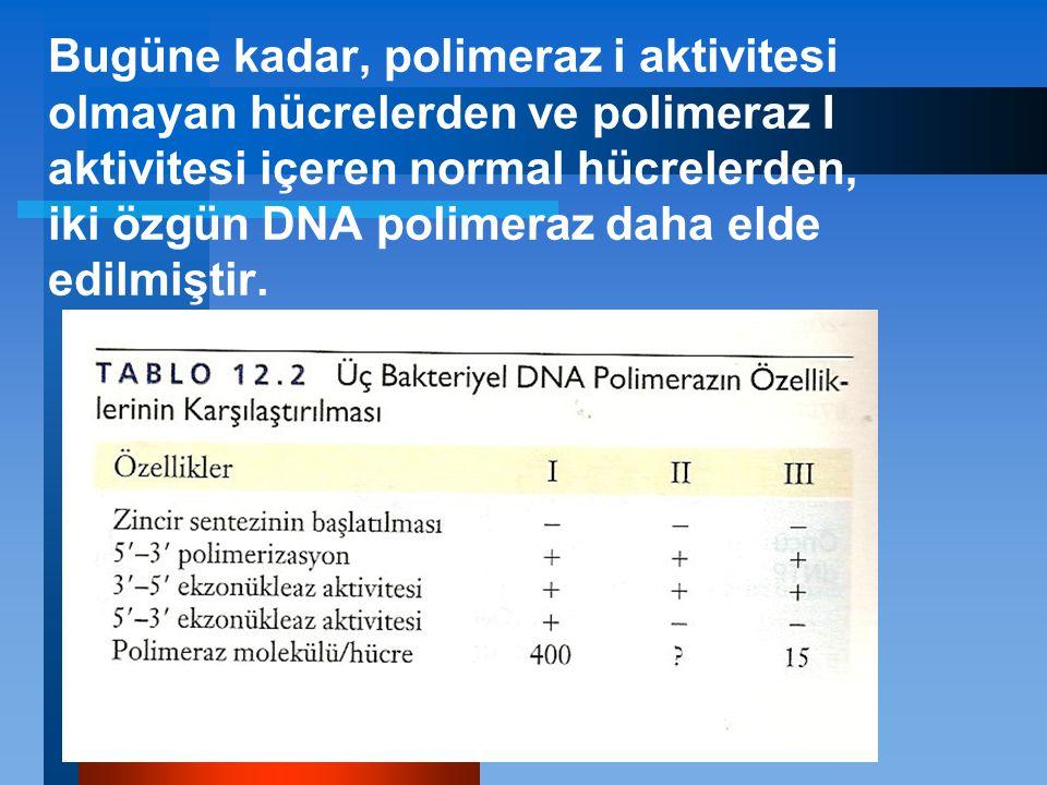 Bugüne kadar, polimeraz i aktivitesi olmayan hücrelerden ve polimeraz I aktivitesi içeren normal hücrelerden, iki özgün DNA polimeraz daha elde edilmi
