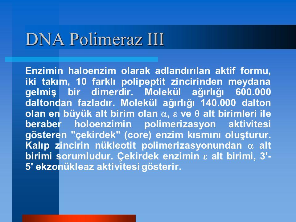 DNA Polimeraz III Enzimin haloenzim olarak adlandırılan aktif formu, iki takım, 10 farklı polipeptit zincirinden meydana gelmiş bir dimerdir. Molekül