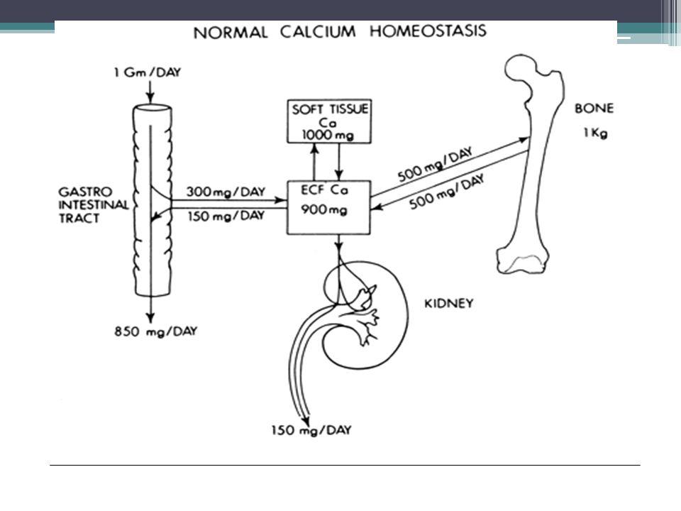 MALİGN HİPERKALSEMİ- PATOFİZYOLOJİ  HUMORAL: Parathormon İlişkili Protein(PTHrP)  OSTEOLİTİK  PRİMER HİPERPARATİROİDİ