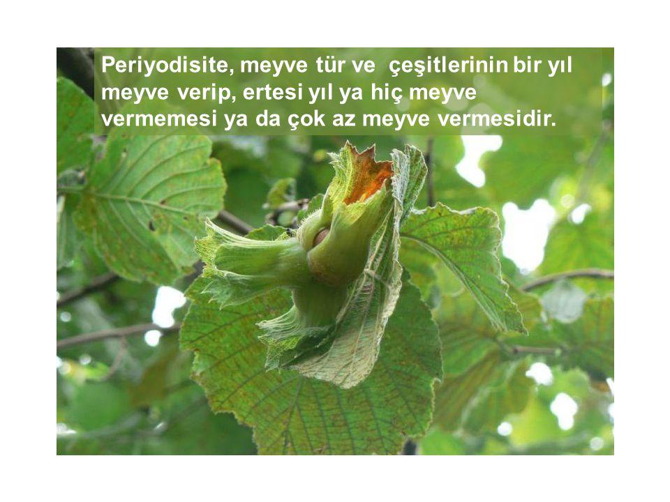 Meyve ağaçlarında periyodisiteye eğilim, türlere hatta tür içindeki çeşitlere göre farklılık gösterebilmektedir.