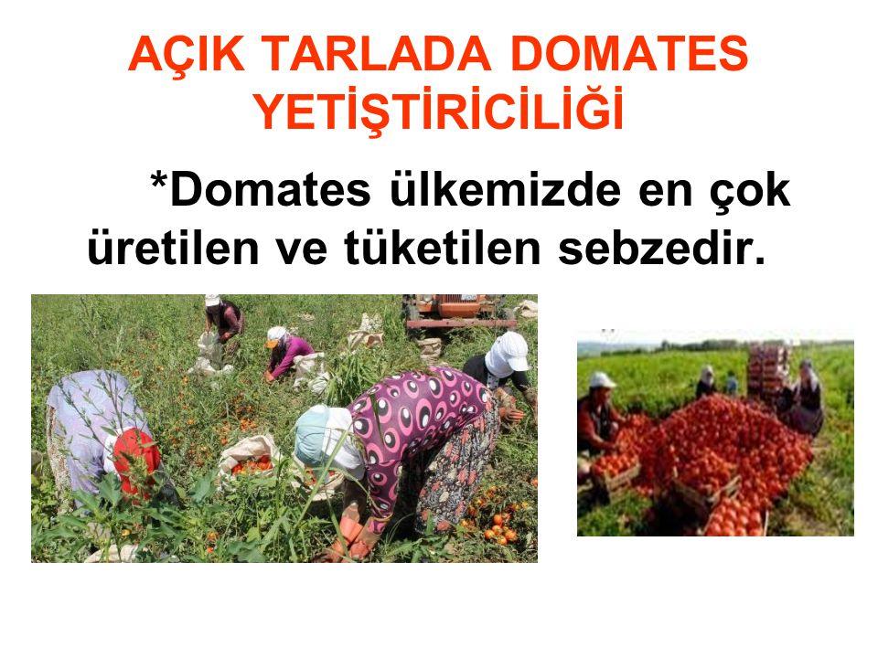 AÇIK TARLADA DOMATES YETİŞTİRİCİLİĞİ *Domates ülkemizde en çok üretilen ve tüketilen sebzedir.