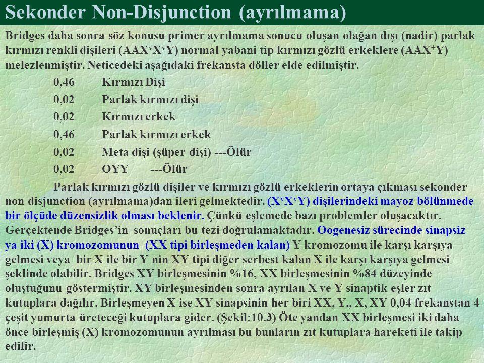 Sekonder Non-Disjunction (ayrılmama) Bridges daha sonra söz konusu primer ayrılmama sonucu oluşan olağan dışı (nadir) parlak kırmızı renkli dişileri (