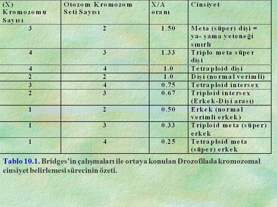 Tablo 10.1. Bridges'in çalışmaları ile ortaya konulan Drozofilada kromozomal cinsiyet belirlemesi sürecinin özeti.