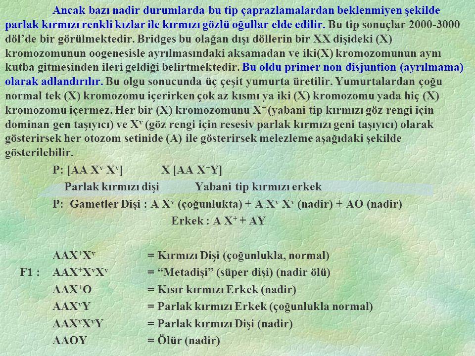 Erkek - Dişi(1/3) AX v (1/3) AX v X v (1/3) A0 (1/2) A X + (1/6) AAX + X v (1/6) AAX + X v X v (1/6) AAX + 0 (1/2) AY(1/6) AAX v Y(1/6) AAX v X v Y(1/6) AAY0 AAX + X v X v yapısındaki bireyler Metafamale (meta dişi) olarak adlandırılır.