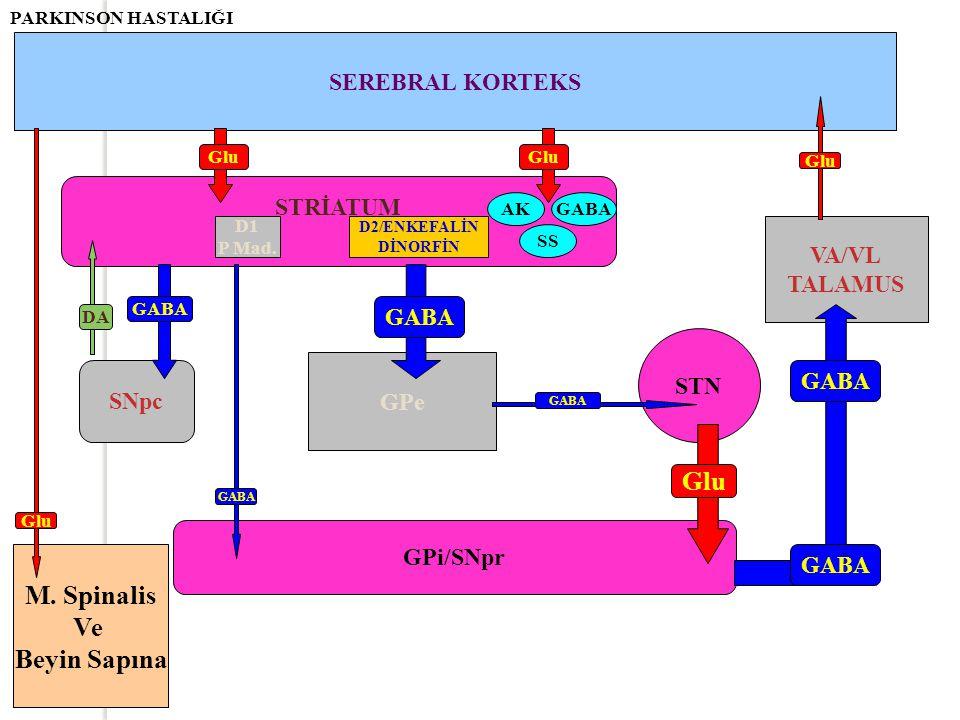 STRİATUM SEREBRAL KORTEKS Glu D1 P Mad. D2/ENKEFALİN DİNORFİN AK SS GABA Glu GPi/SNpr GABA SNpc M. Spinalis Ve Beyin Sapına GABA Glu GPe STN GABA VA/V