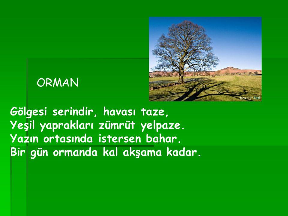Gölgesi serindir, havası taze, Yeşil yaprakları zümrüt yelpaze. Yazın ortasında istersen bahar. Bir gün ormanda kal akşama kadar. ORMAN