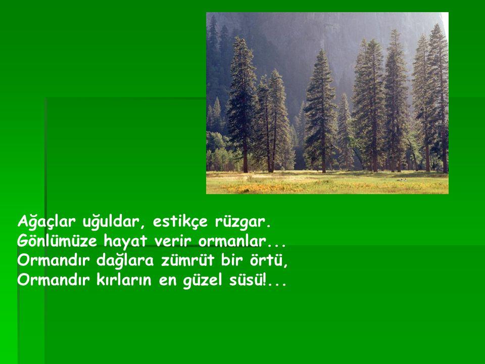 Ağaçlar uğuldar, estikçe rüzgar. Gönlümüze hayat verir ormanlar... Ormandır dağlara zümrüt bir örtü, Ormandır kırların en güzel süsü!...