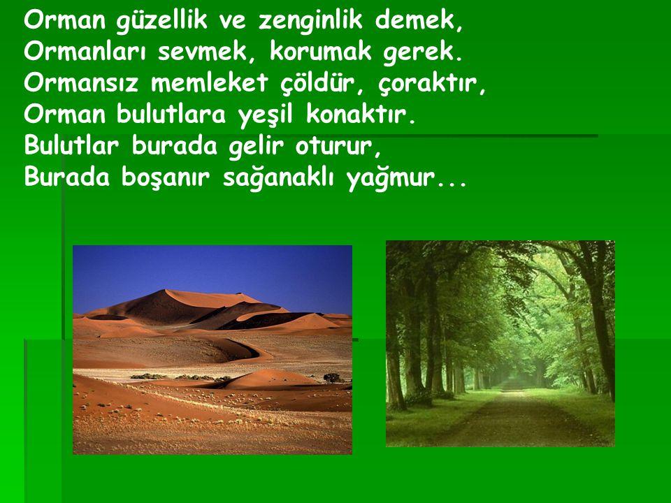 Orman güzellik ve zenginlik demek, Ormanları sevmek, korumak gerek. Ormansız memleket çöldür, çoraktır, Orman bulutlara yeşil konaktır. Bulutlar burad