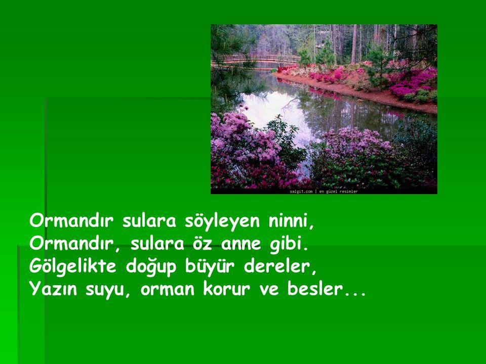 Ormandır sulara söyleyen ninni, Ormandır, sulara öz anne gibi. Gölgelikte doğup büyür dereler, Yazın suyu, orman korur ve besler...