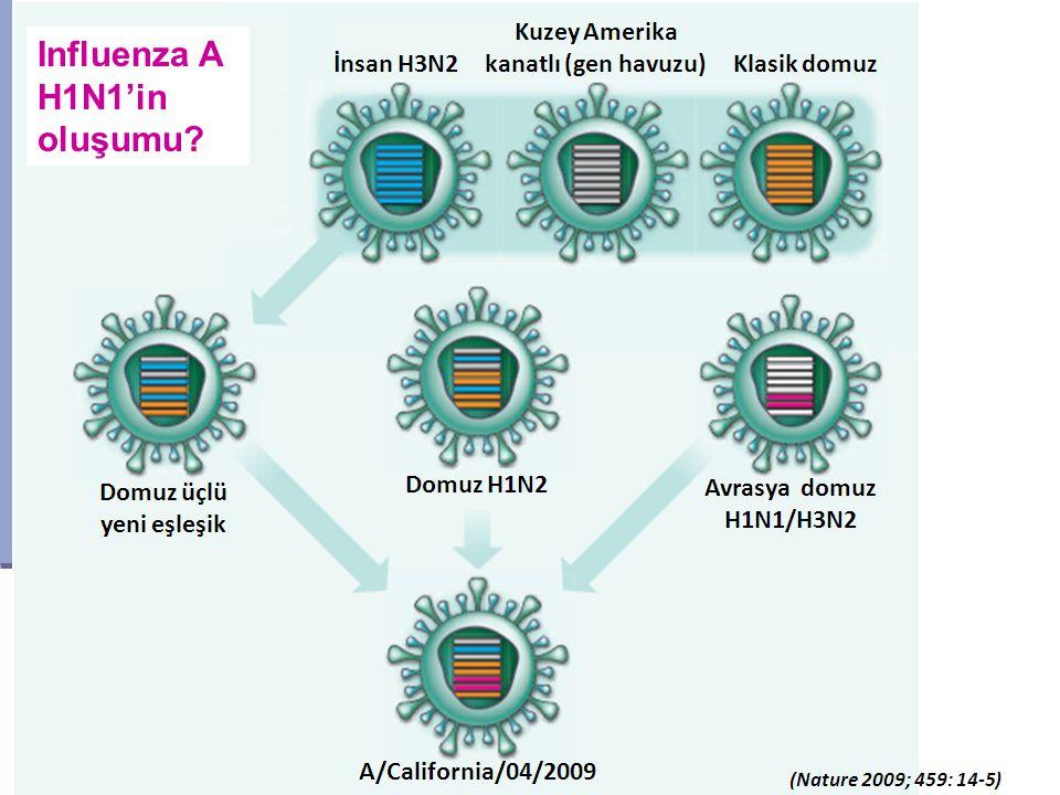 Influenza A H1N1'in oluşumu?