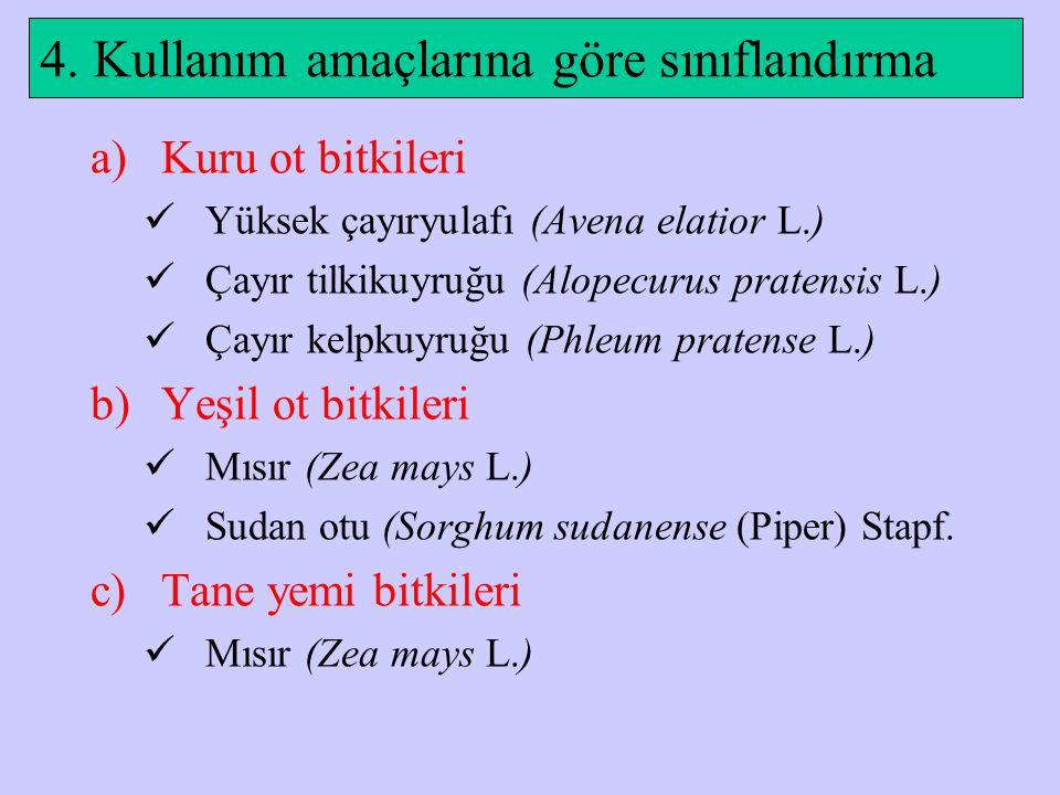4. Kullanım amaçlarına göre sınıflandırma a)Kuru ot bitkileri Yüksek çayıryulafı (Avena elatior L.) Çayır tilkikuyruğu (Alopecurus pratensis L.) Çayır