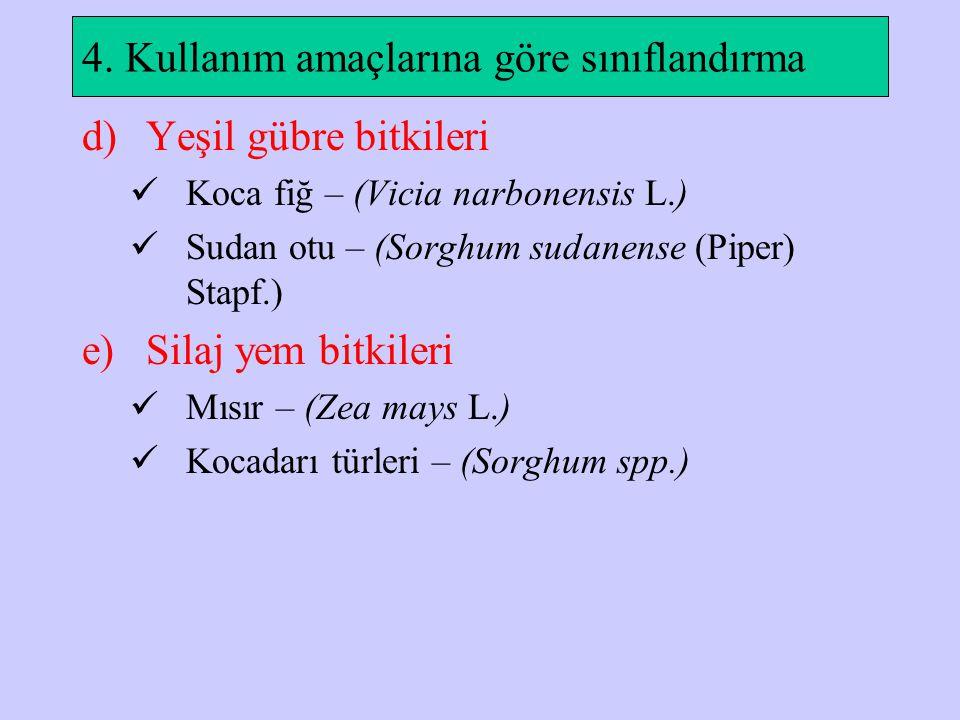 4. Kullanım amaçlarına göre sınıflandırma d)Yeşil gübre bitkileri Koca fiğ – (Vicia narbonensis L.) Sudan otu – (Sorghum sudanense (Piper) Stapf.) e)S