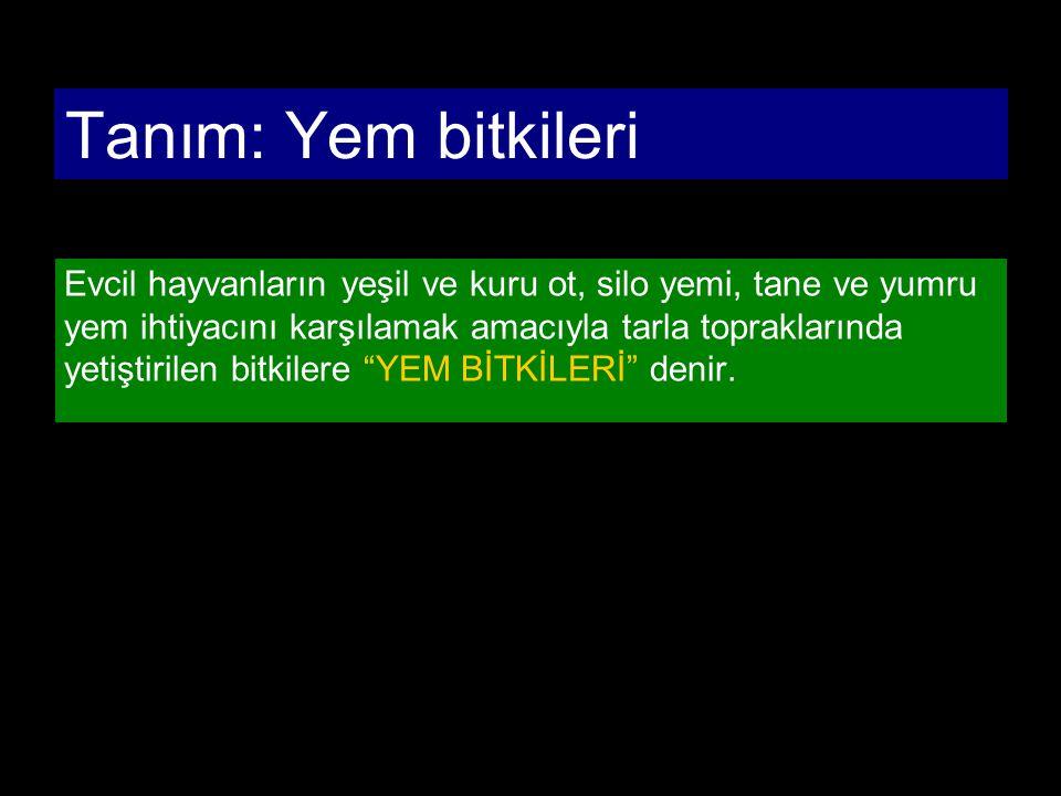 YEM BİTKİLERİNİN SINIFLANDIRMASI 1.